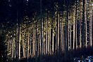 Wald-Lichtung_PRV_0905akl