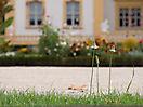 Photoreise Würzburg