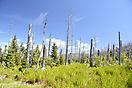 Bayer Wald Wald erneuert sich