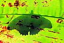 3. Platz 'Schatten-Schmetterling' von Ingo Rittscher