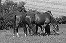 14. Platz 'Pferdegeflüster' von Wolfgang Leierer